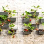 10 Easy Ways to Grow Your Own Food in a Small Space