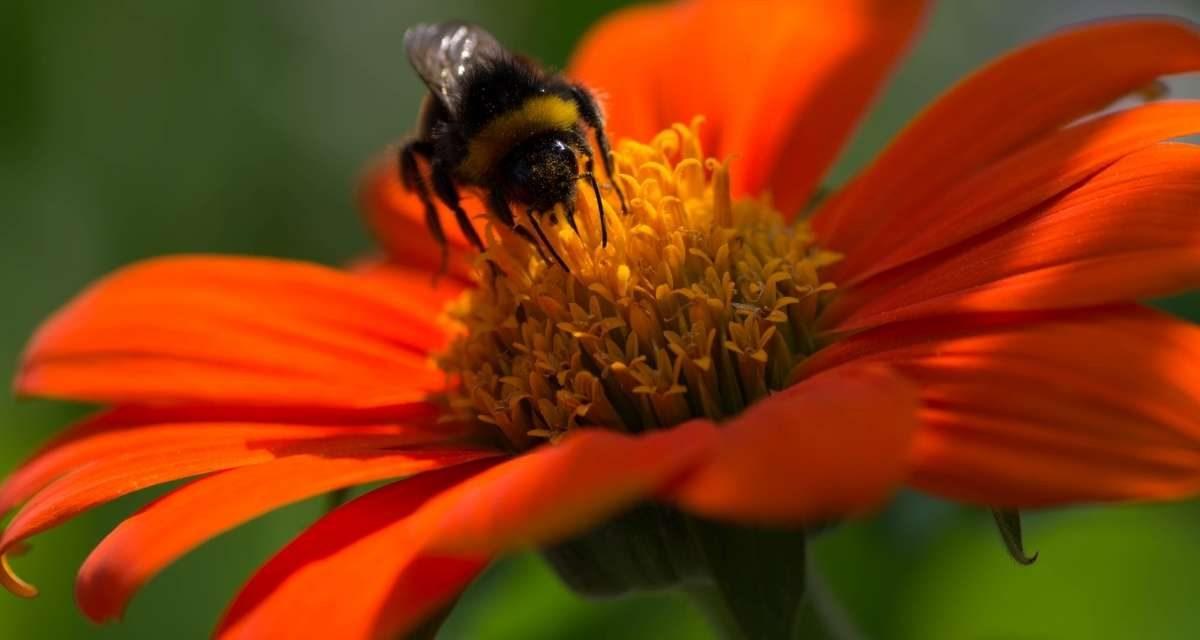 How to Create a Bee-Friendly Garden