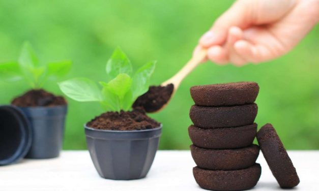 Using Coffee Grounds for Gardening – Myth Busting Tips