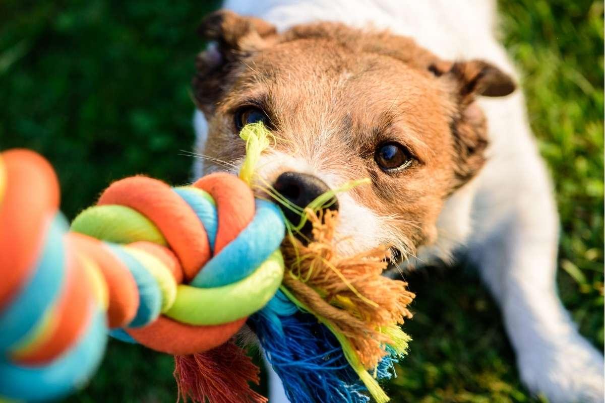 Eco Friendly Chew Toy