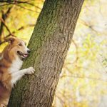 How To Become An Eco-Friendly Pet Owner