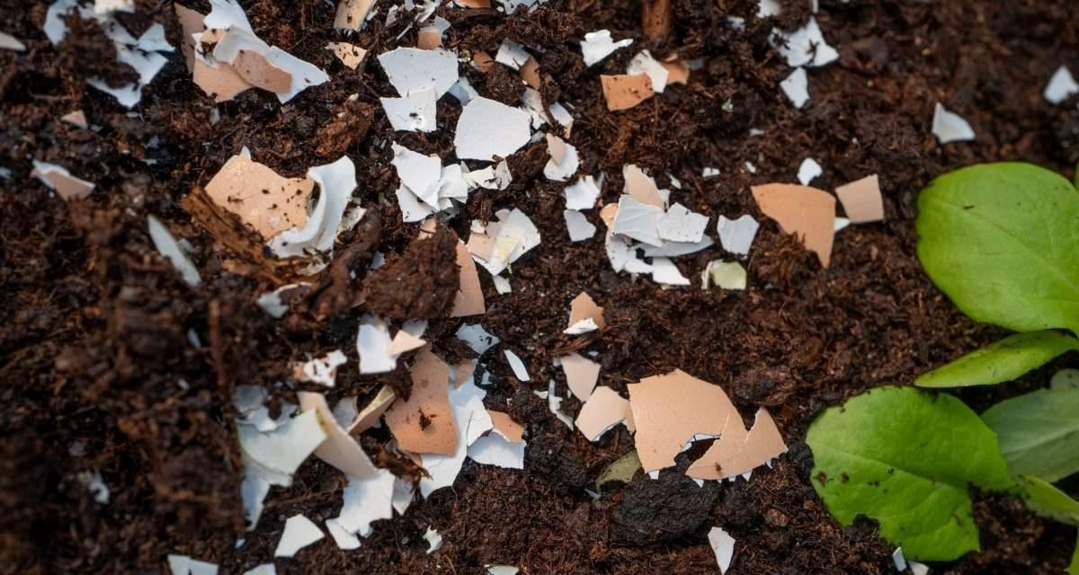 5 Top Tips for Using Eggshells In The Garden